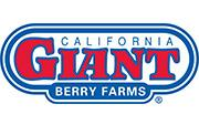 California Giant Berry Farms, Giant Berry Farms's picture